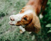 formation ostéopathie animale